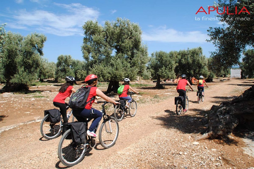 bike tour in Monopoli countryside